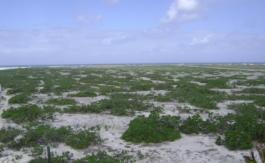 Île Tromelin: début de la fin de la puissance bleue?