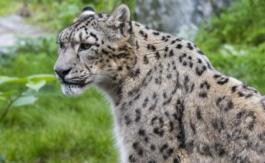 La Terre aperdu 60% de ses populations d'animaux sauvages depuis 1970