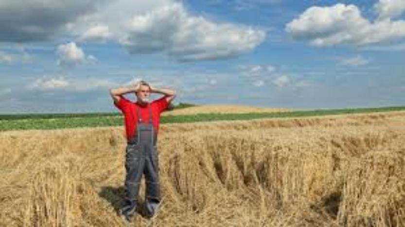 L'importance vitale de la souveraineté   alimentaire.